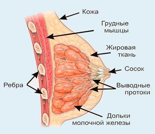 Почему видны вены после пластики груди?